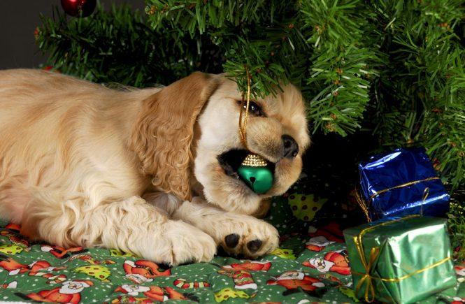 Собака жуёт ёлочную игрушку