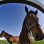Обои для рабочего стола лошадь
