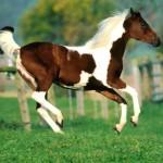 лошади на рабочий стол