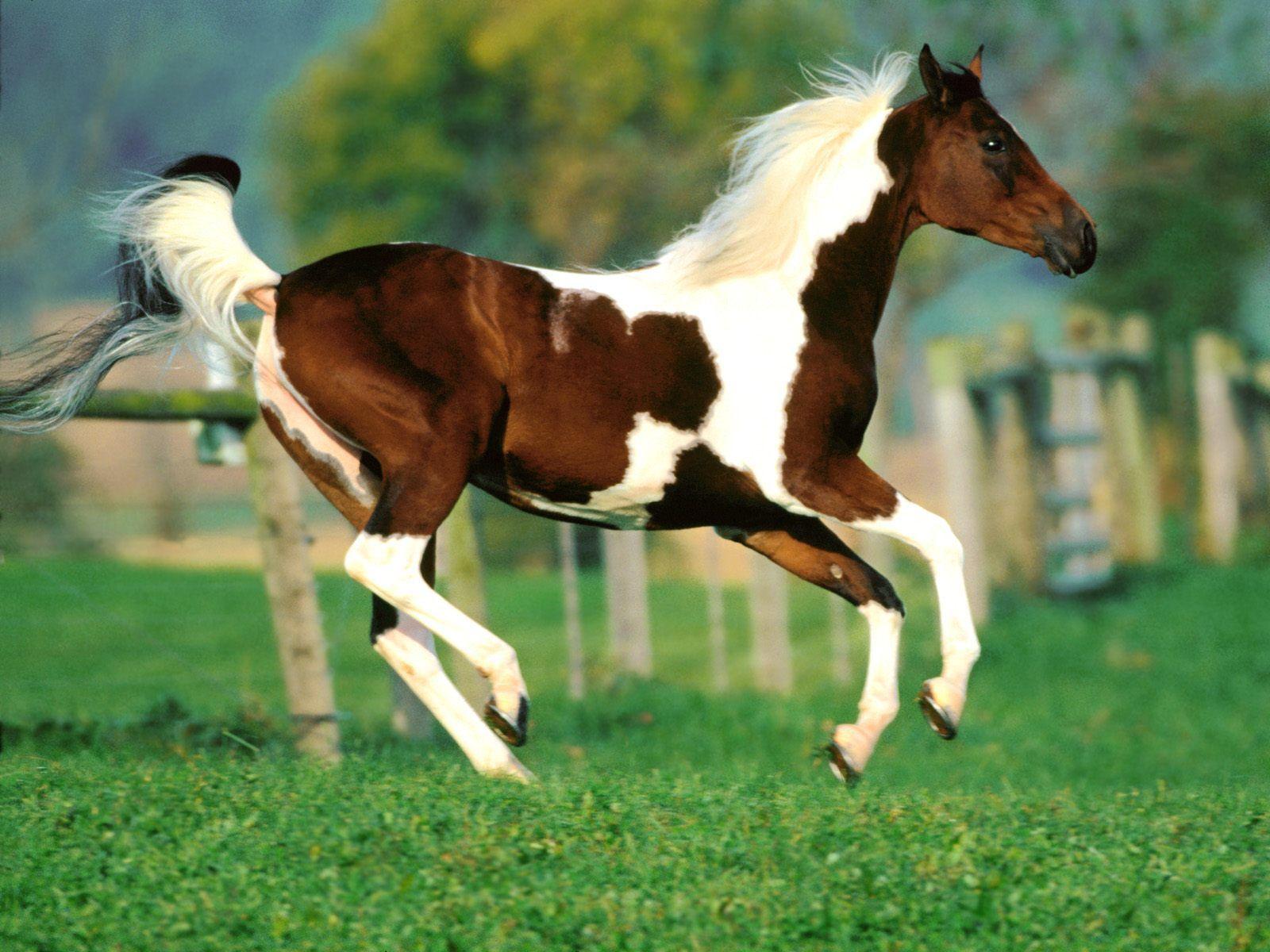 при картинки разных лошадей нахичевани