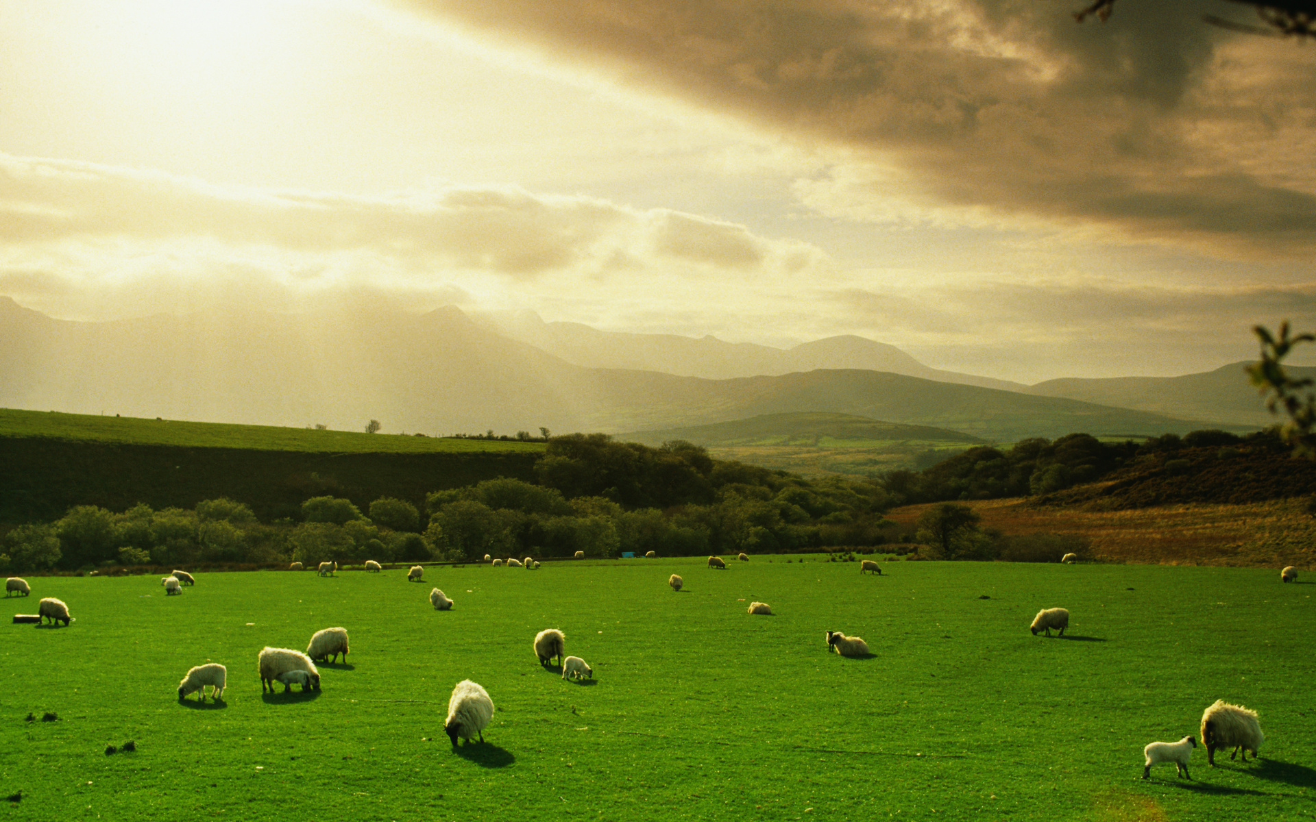 последнем картинки луг с овцами что самое