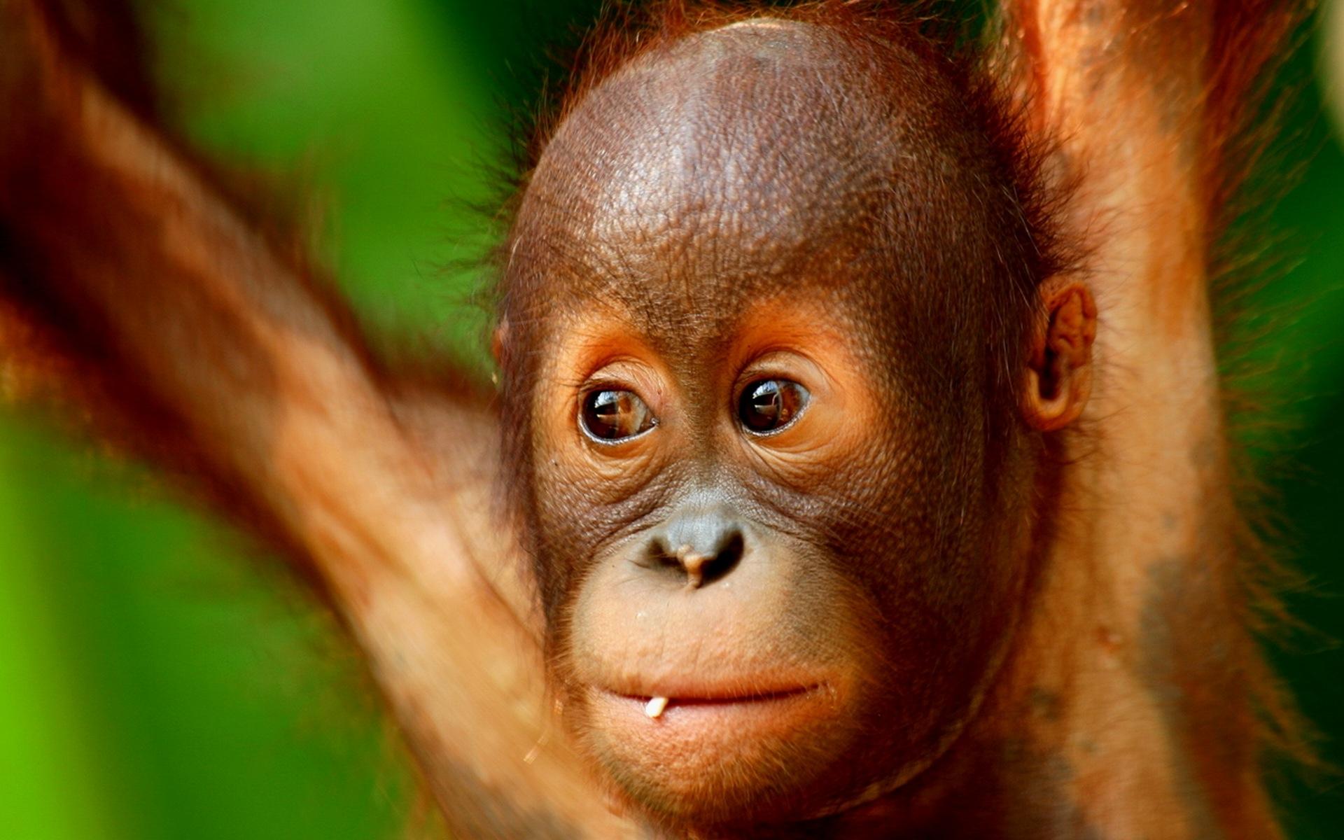 Фото рисунок обезьяна