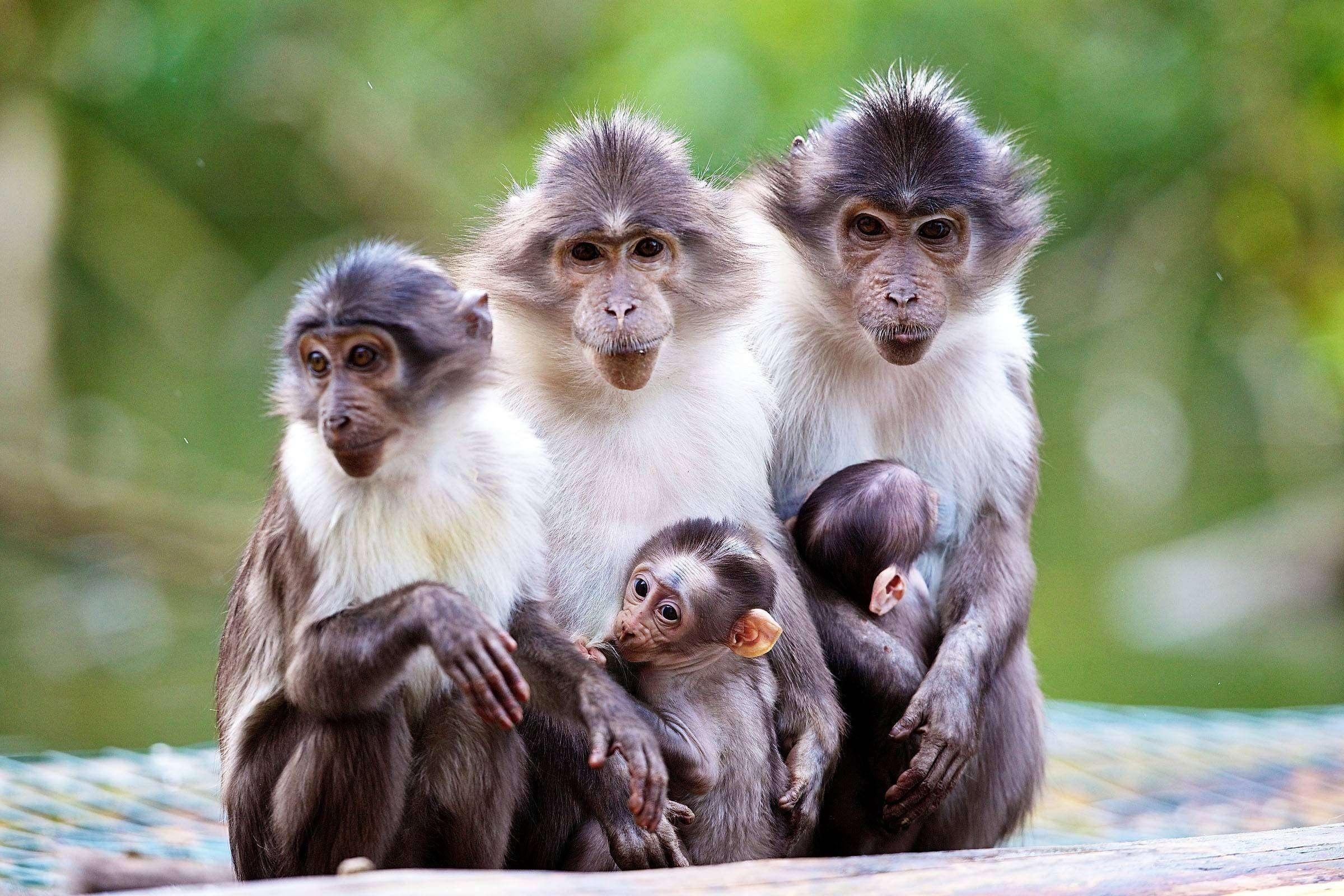 Смешные картинки приматов