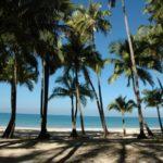 Пальмовый лес