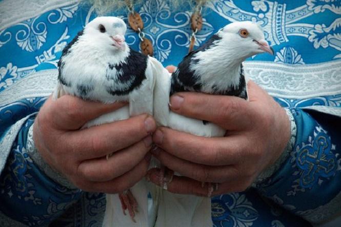 Черные с белым голуби