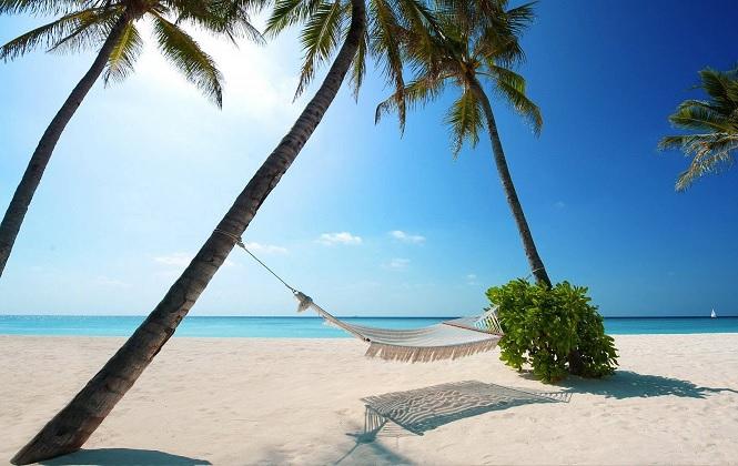 Удобное место для отдыха под пальмами