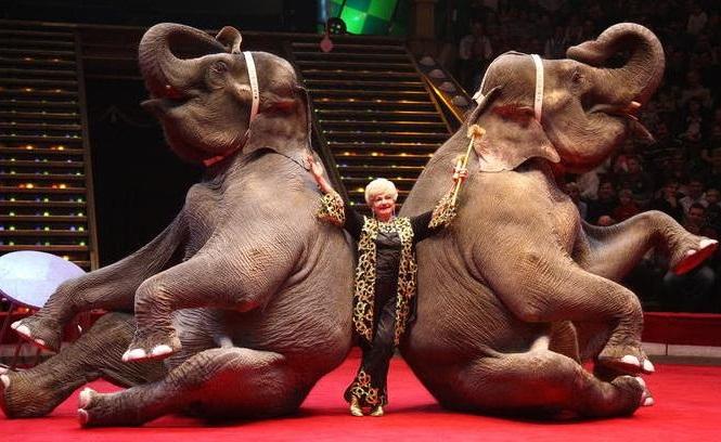 Три слонихи