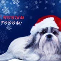 с новым годом собаки болонка