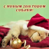 с новым 2018 годом собаки щенок лабрадор спит