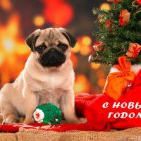 С Новым годом собаки мопс