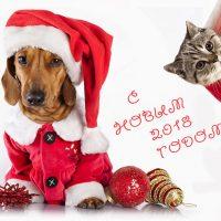 С Новым годом собаки Такса и кот