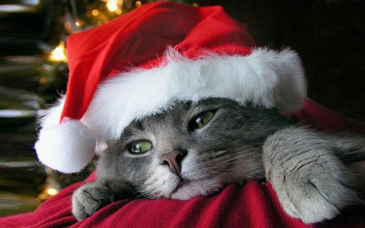 Грустный новогодний кот